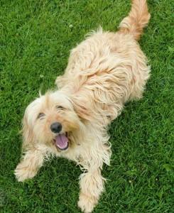 hond-liggen-in-gras
