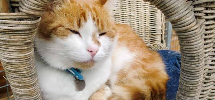 Kat opvang voor dieren Shanai foto 2