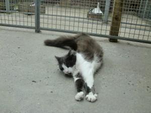 Deze kat voelt zich relaxed om fijn te rollen en zich uit te strekken