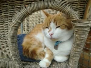 Heerlijk wegdromen op één van de stoelen en kussentjes in het verblijf