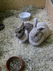 Ook uw konijn voelt zich prima thuis bij ons